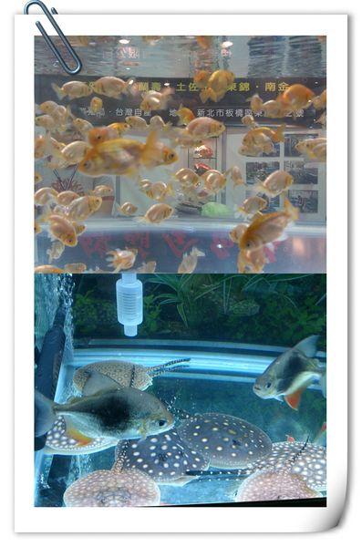 2013台灣觀賞魚博覽會[台北南港展覽館]19
