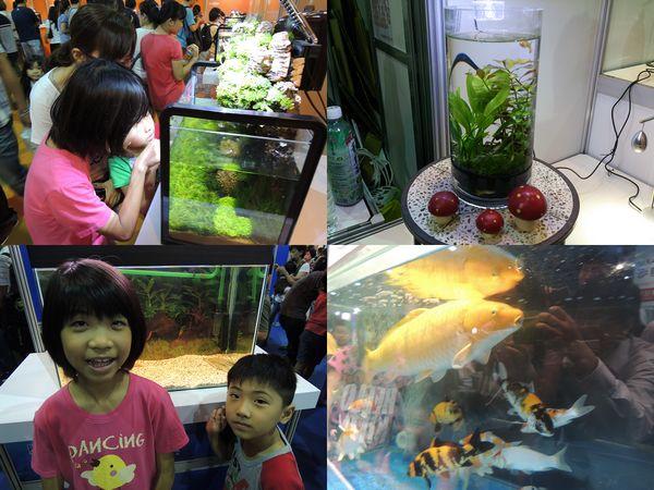 2013台灣觀賞魚博覽會[台北南港展覽館]22