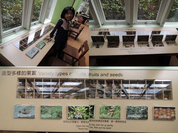 福山植物園[宜蘭員山]40