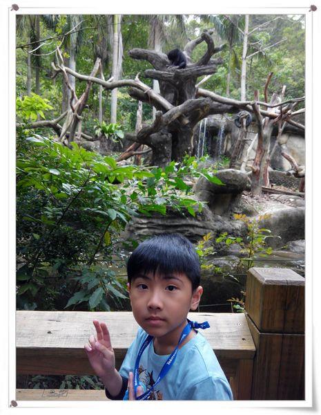 台北市立木柵動物園Taipei City Zoo3