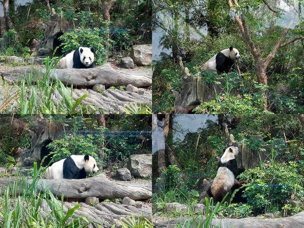 台北市立木柵動物園Taipei City Zoo15