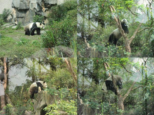 台北市立木柵動物園Taipei City Zoo16