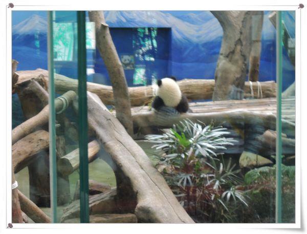 台北市立木柵動物園Taipei City Zoo18