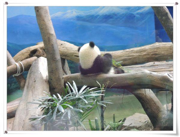 台北市立木柵動物園Taipei City Zoo19