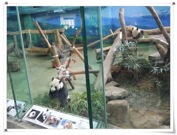 台北市立木柵動物園Taipei City Zoo20