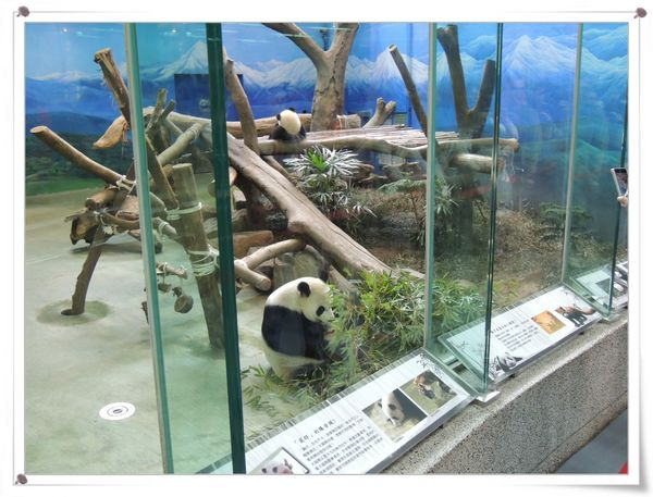 台北市立木柵動物園Taipei City Zoo21