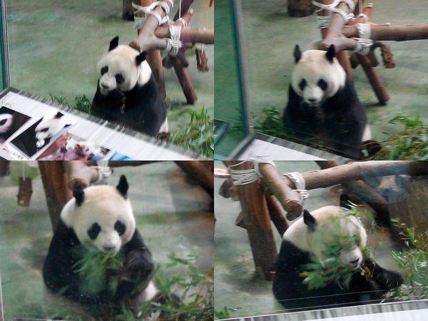 台北市立木柵動物園Taipei City Zoo22