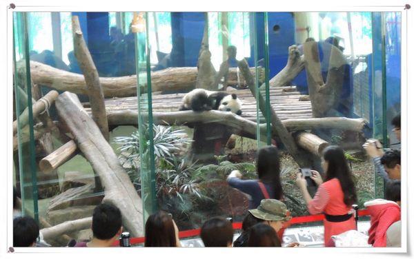 台北市立木柵動物園Taipei City Zoo25