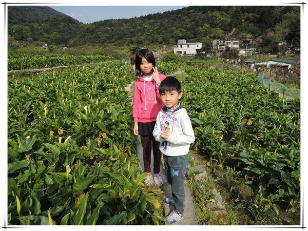 2014竹子湖海芋季[陽明山國家公園]2