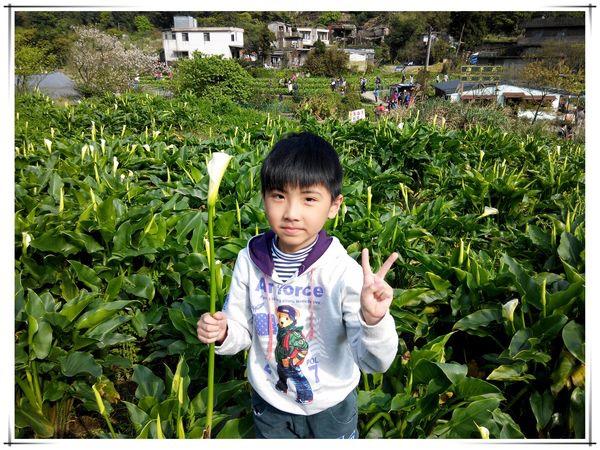 2014竹子湖海芋季[陽明山國家公園]5