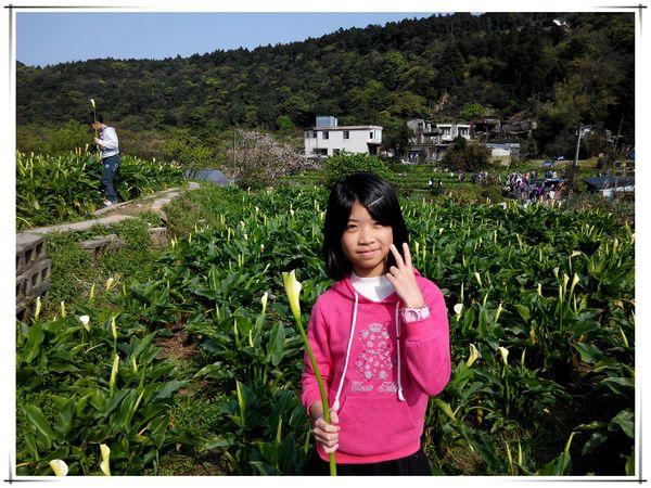 2014竹子湖海芋季[陽明山國家公園]7