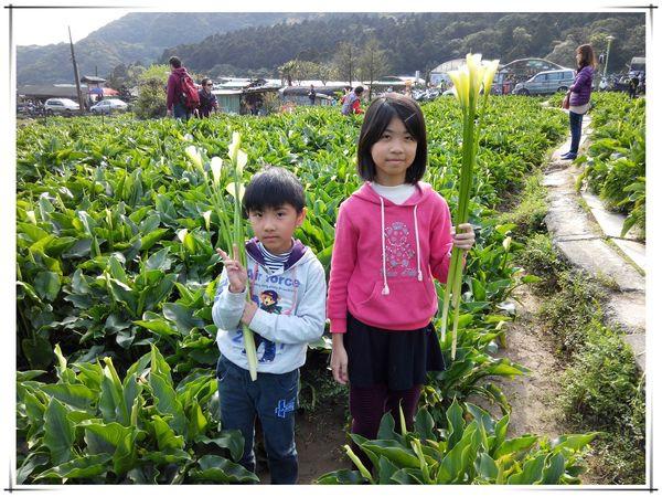 2014竹子湖海芋季[陽明山國家公園]8