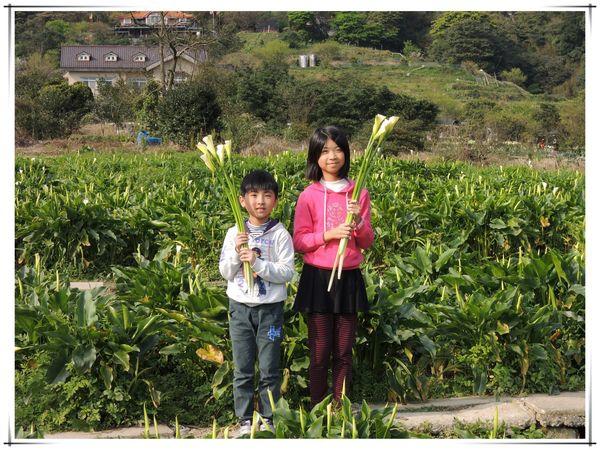2014竹子湖海芋季[陽明山國家公園]9