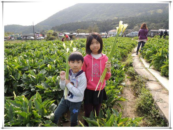 2014竹子湖海芋季[陽明山國家公園]10