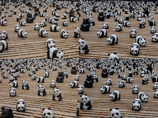 「1600貓熊世界之旅—台北」紙貓熊展[中正紀念堂]5