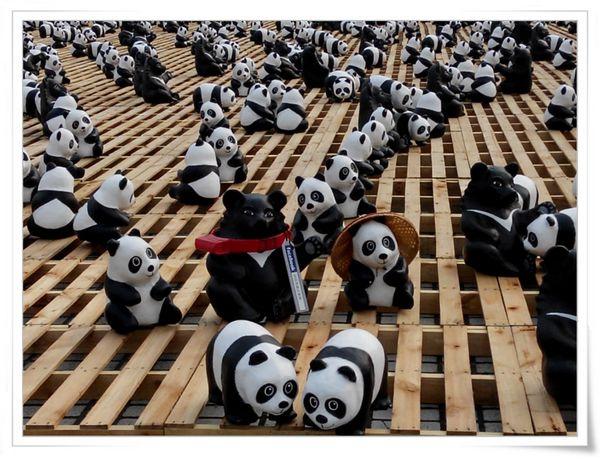 「1600貓熊世界之旅—台北」紙貓熊展[中正紀念堂]8