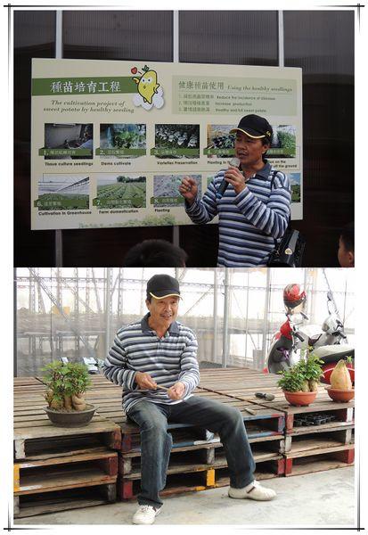 台南新化瓜瓜園_地瓜生態故事館11