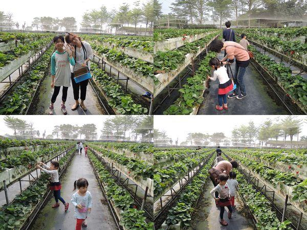 大安草莓園_大安生態教育農場[台南善化]3