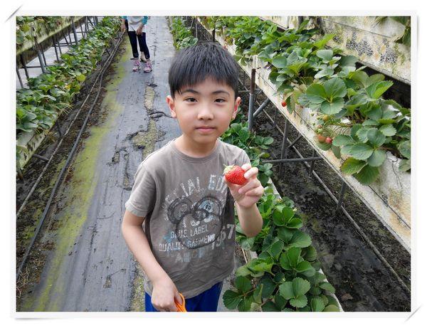 大安草莓園_大安生態教育農場[台南善化]4