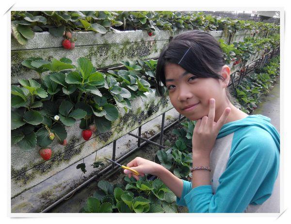 大安草莓園_大安生態教育農場[台南善化]5
