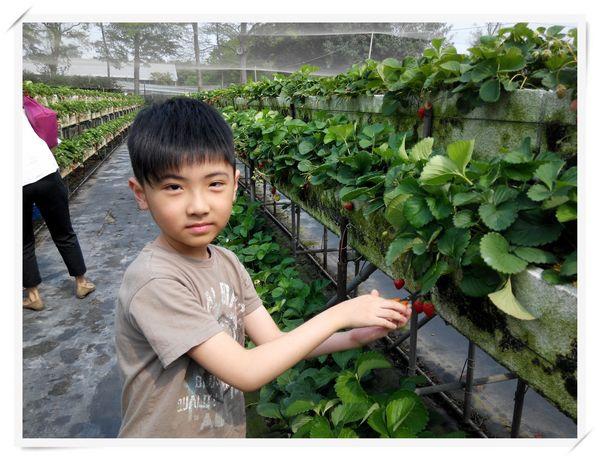 大安草莓園_大安生態教育農場[台南善化]6