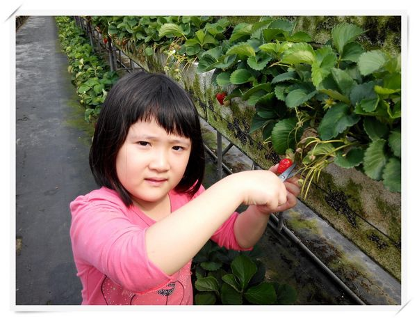 大安草莓園_大安生態教育農場[台南善化]7