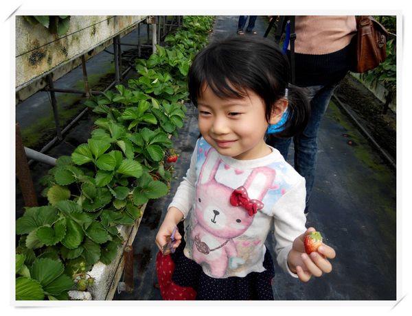 大安草莓園_大安生態教育農場[台南善化]8