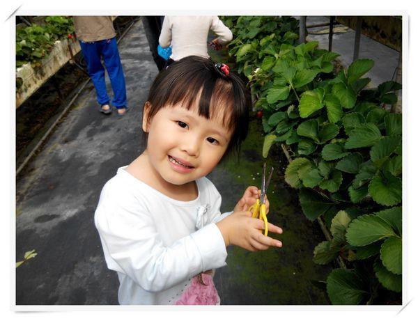 大安草莓園_大安生態教育農場[台南善化]9