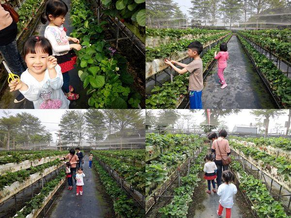 大安草莓園_大安生態教育農場[台南善化]10