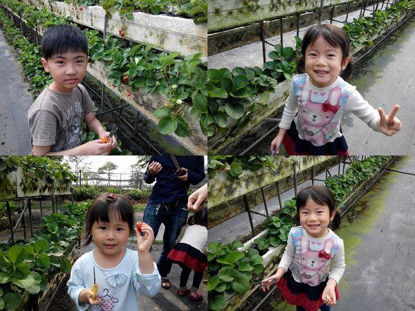 大安草莓園_大安生態教育農場[台南善化]11