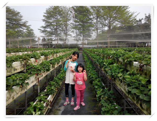 大安草莓園_大安生態教育農場[台南善化]12