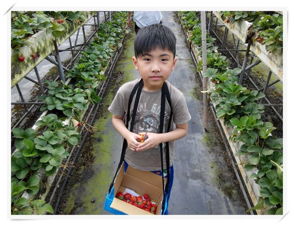 大安草莓園_大安生態教育農場[台南善化]13