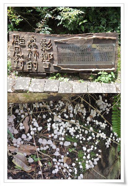福山植物園&雙連埤生態教室[宜蘭員山]34