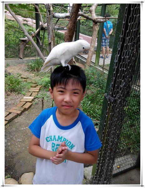 森林鳥花園[新竹新埔]22
