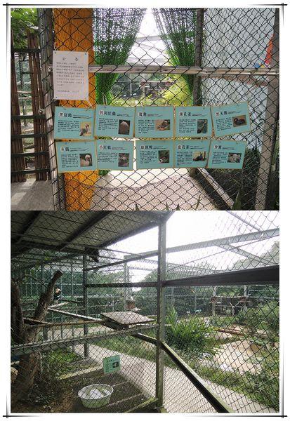 森林鳥花園[新竹新埔]37