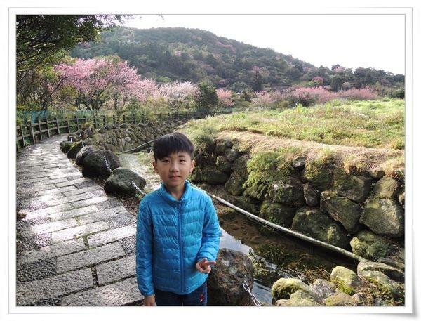 2015竹子湖海芋季[陽明山國家公園]5