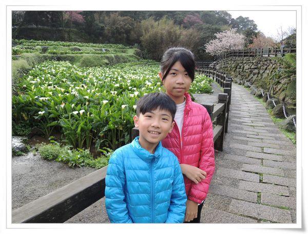 2015竹子湖海芋季[陽明山國家公園]7