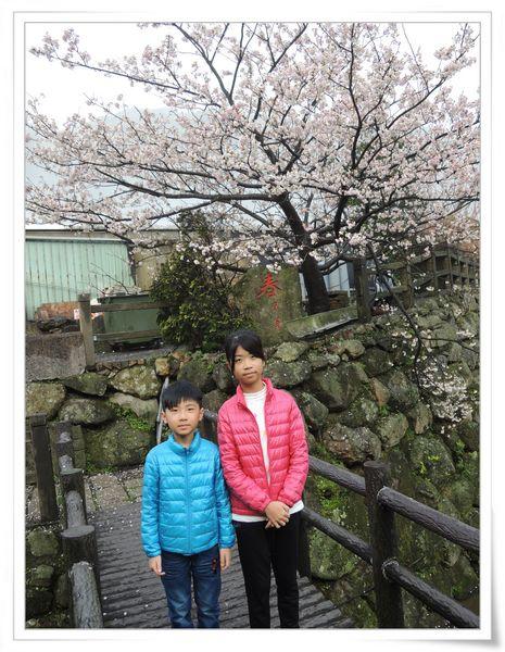 2015竹子湖海芋季[陽明山國家公園]8