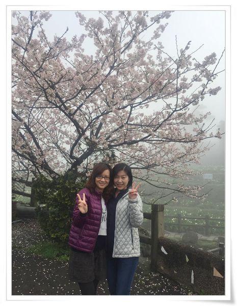 2015竹子湖海芋季[陽明山國家公園]13