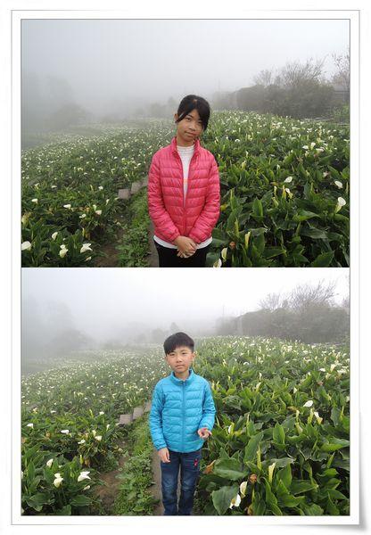 2015竹子湖海芋季[陽明山國家公園]14