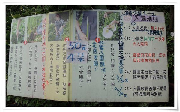2015竹子湖海芋季[陽明山國家公園]19