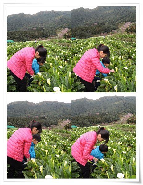 2015竹子湖海芋季[陽明山國家公園]21