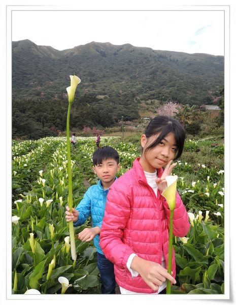 2015竹子湖海芋季[陽明山國家公園]22