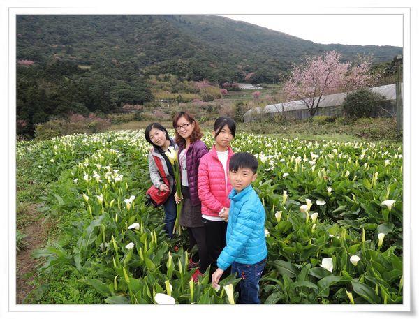2015竹子湖海芋季[陽明山國家公園]24