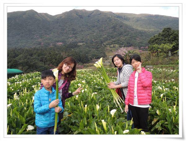 2015竹子湖海芋季[陽明山國家公園]25