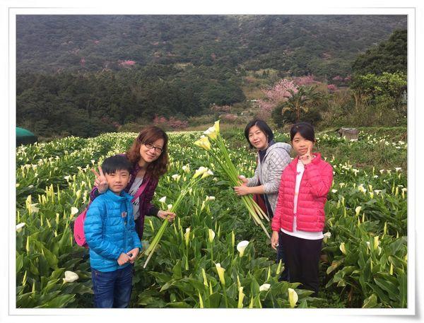 2015竹子湖海芋季[陽明山國家公園]27