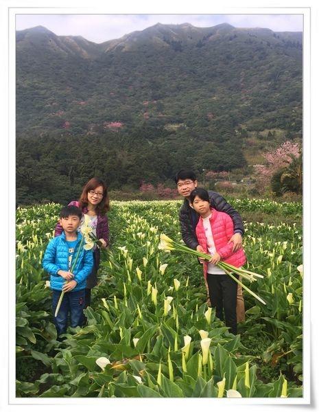 2015竹子湖海芋季[陽明山國家公園]29
