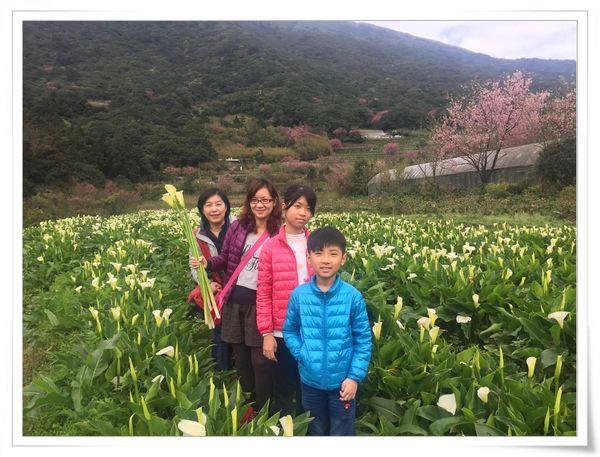 2015竹子湖海芋季[陽明山國家公園]30