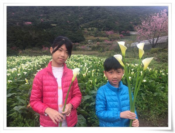 2015竹子湖海芋季[陽明山國家公園]31