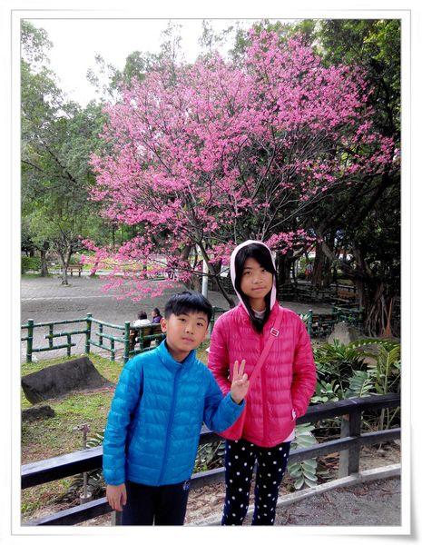 2015臺北燈節_台北市「喜咩」小提燈&賞櫻@中正紀念堂3